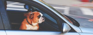 top tips to avoid and prevent distracted driving - secure pets